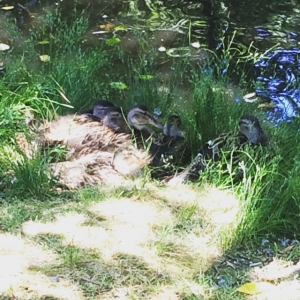 huddled near the natural pond