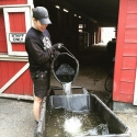 Instagram: #farmer Julia has been taking the old water from the animals' buckets to water plants and shrubs around #maplewoodfarm #districtofnorthvancouver #level3waterrestrictions #reuse